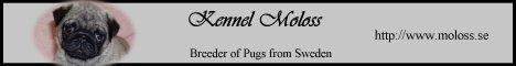 Moloss Kennel